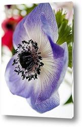 Цветок из семейства лютиковых на фоне неба