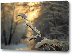 Ветки дерева с хлопьями снега