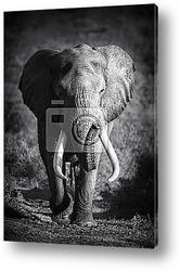 Постер Elephant Bull (Artistic processing)