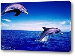 dolphin113