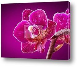 Мини орхидея на розовом фоне