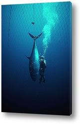 diving006
