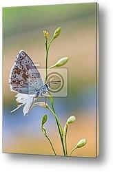 Бабочка на камнях