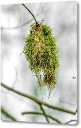 Постер Мох на дереве