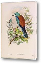 Птицы Австралии