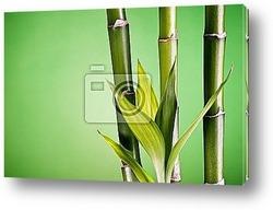 Постер Bambou zen