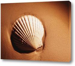 shell040