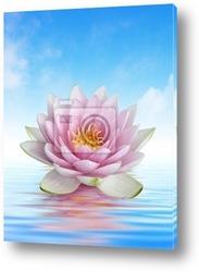 Champ de lotus blanc