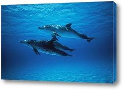 dolphin024