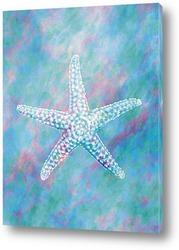 starfish029