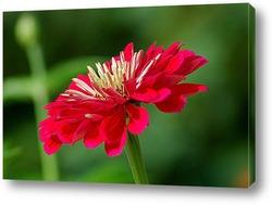 Красивый цветок с бабочкой