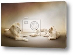 Постер White lion family
