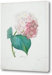 Картина Гортензия