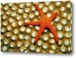 Постер Starfish016