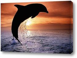 Постер Dolphin112