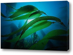 algae021