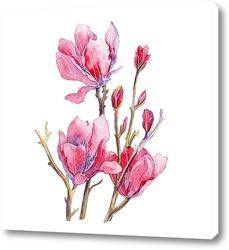 Orchideen 15.1
