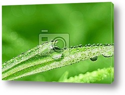 Banners - Grass with dewdrops.