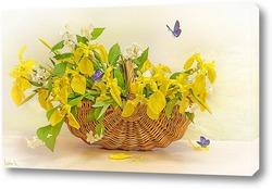 Постер Жёлтые ирисы