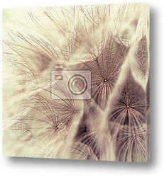 Постер Abstract closeup of a meadow salsify