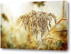 Постер замороженная тростника