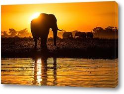 Постер Золотой слон