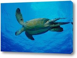 Постер Turtle010