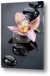 Постер Цветок орхидеи на камнях