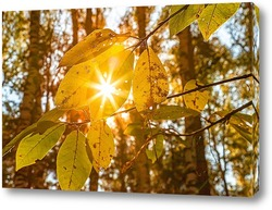 Кленовый, осенний лист, с просвечивающими лучами солнцу.