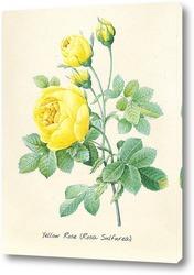 Постер Жёлтая роза