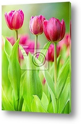 Обручальные кольца на тюльпанах