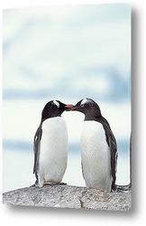 Пара пингвинов.