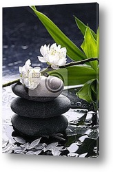 Black massage stones with cherry ,petal on water drops