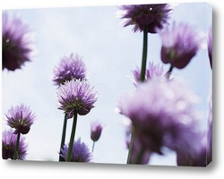 Flower487