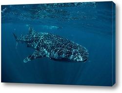 Постер Shark055