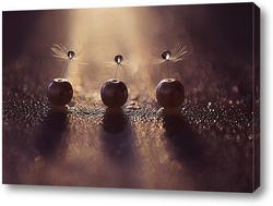 Постер Одуванчики с каплей воды в бусинках