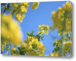 flower-571893