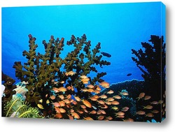 Постер Coral012