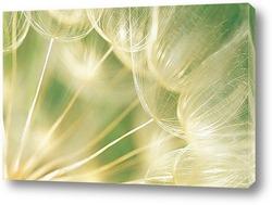 Облетели твои семена
