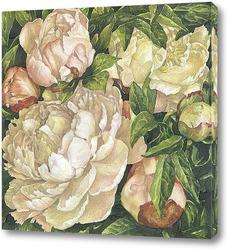Постер Утренние розовые пионы