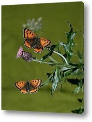 Василек и бабочки