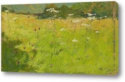 Постер Цветы в полях