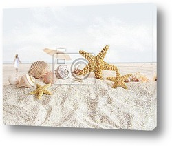 Постер Starfish and seashells  at the beach