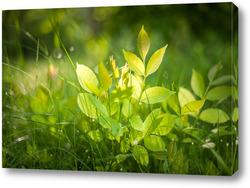 Картина Зеленая трава на луговом поле