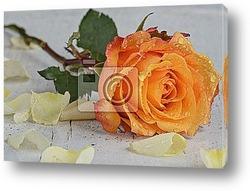 Белая свадебная роза