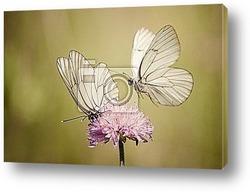 """Красивая бабочка"""