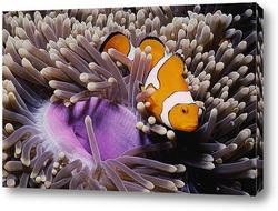 fish051