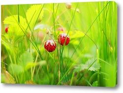 Цветение берёзы
