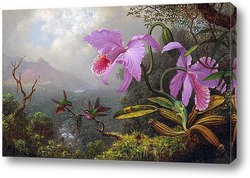 Постер Две колибри на ветке рядом с двумя орхидеями
