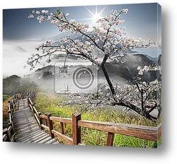 Постер Куст японской сакуры весной
